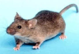 Muizen temidden van vliegtuigmaaltijden