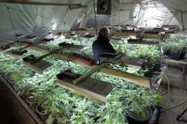 Kooklessen met marihuana populair in de VS