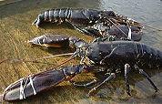 Culinaire wedstrijd prooi voor Fishes