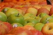 CDA wil schoolfruit in heel Europa