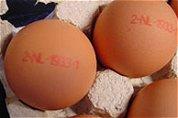 Brussel: Geen risico eten rauwe eieren