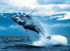 Japanse fastfoodketen komt met walvisburger