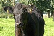 La Vie houdt diner tussen koeien