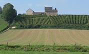 Extreem vroege wijnoogst in Nederland