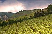 Klosse: Nederland herontdekt Duitse wijn