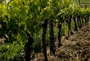 Wijnland Frankrijk blijft superieur