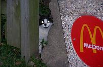 Zwerfkatten bij McDonald's en Mercure