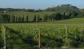 Grote zwendel met Italiaanse wijn