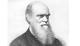 Kookrecept Charles Darwin op internet