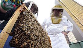 Hotel houdt zelf bijen voor honing