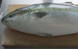 Japanse tonijnen krijgen acupunctuur