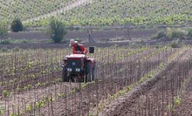 'Italiaanse wijnbouw passeert Frankrijk