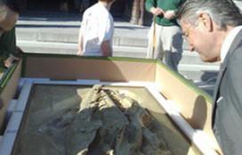 Oostwegel haalt schedel uit Frankrijk