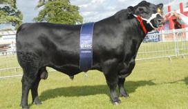 Honderd chefs op bezoek bij Schots rundvlees