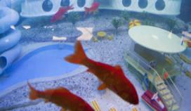 Goudvissen hotel naar Sealife