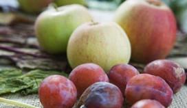 Groeikansen voor biologische producten