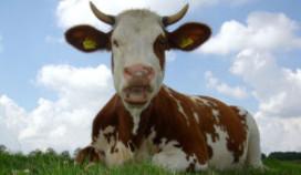 Drie procent boeren concurreert met horeca