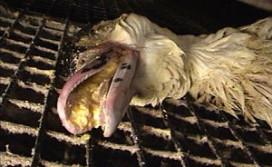 Avifauna haalt foie gras van de kaart
