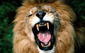 Woensdag leeuwengehaktdag