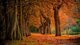 1,3 miljoen Nederlanders op herfstvakantie