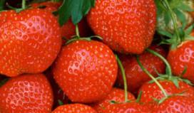 Wimbledon verorbert 27 ton Hollandse aardbeien