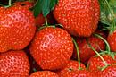 Wimbledon verorbert 27 ton aardbeien