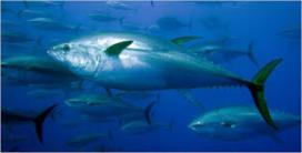 Vitam stopt met tonijn