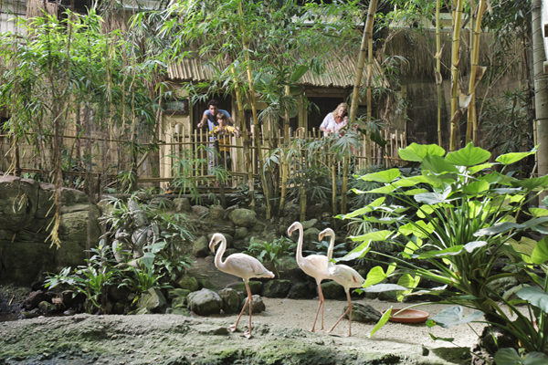 Center Parcs start met slapen in de jungle