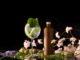 Taiko gin 4 80x60