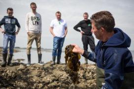 Groente van de toekomst: zuiver zeewier