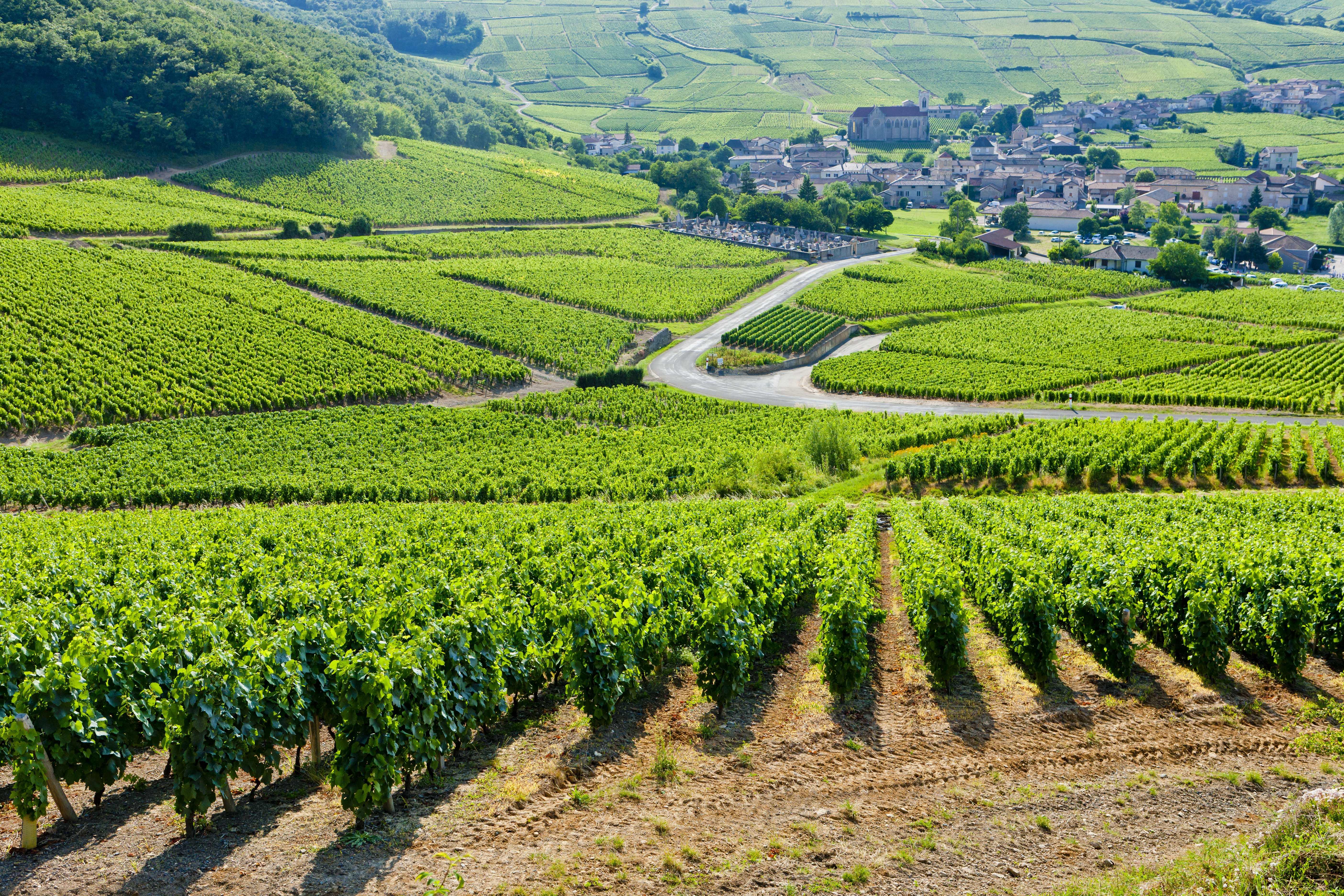 waarom is wijn zo duur