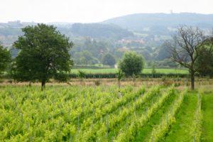 Nieuwe Nederlandse mousserende wijn uit Limburg