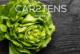 Carstens pb header 80x54