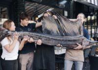 Seafoodbar Vigo: zeilvis als vangst van de dag