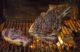 Vuur, vlam en vlees: grillen op topniveau bij Julian de Tolosa