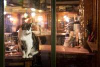 Kroegtijgers gezocht: café-katten die hun gasten missen